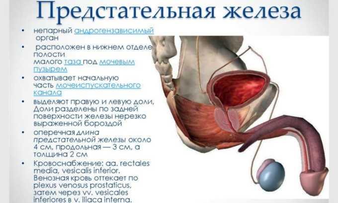 Максимальное содержание компонента наблюдается в предстательной железе