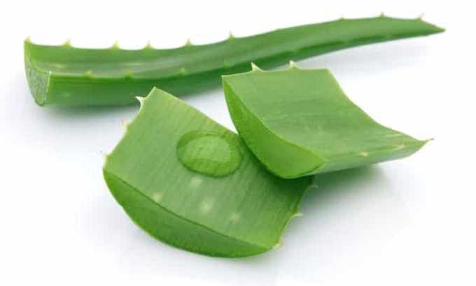 Ускорить процесс выздоровления можно с помощью столетника (алоэ), рекомендуется брать растение, которому не менее 3 лет