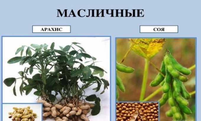 Вещество содержится в арахисе и сое