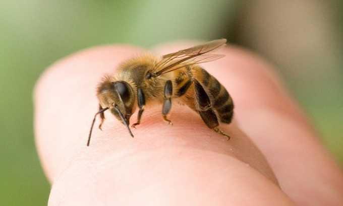 Укус пчелы - одно из показаний к применению Анальгина