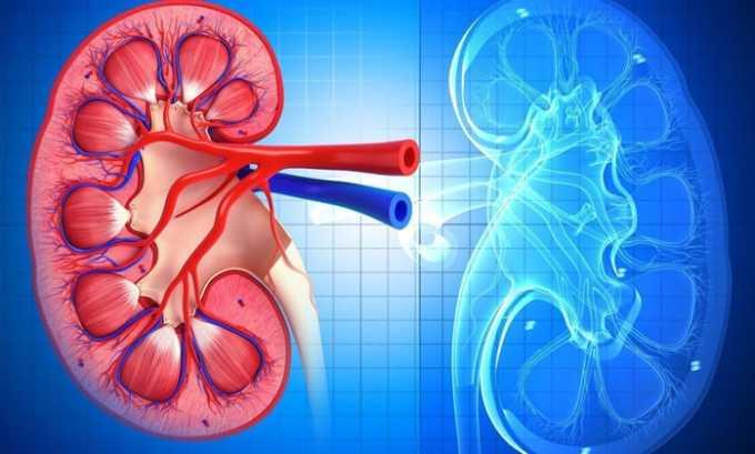 Хофитол применяют для лечения протекающего в хронической форме нефрита