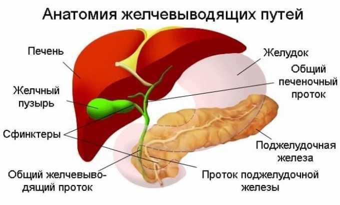 Препарат Но-Шпа используется при спазмах гладких мышц при заболеваниях желчевыводящих путей