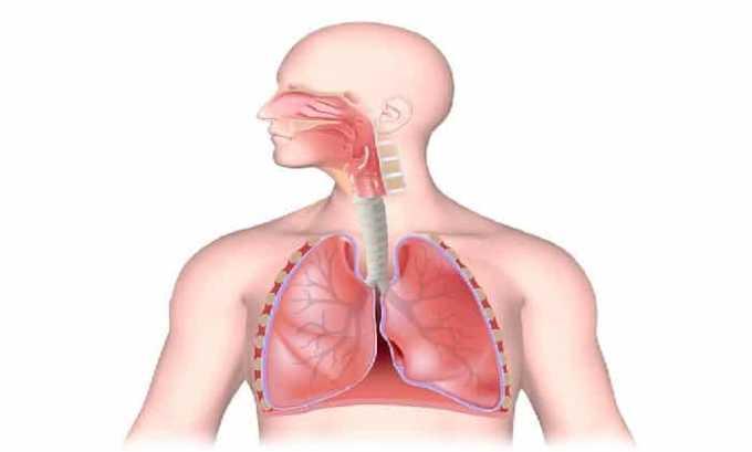 Воспаление верхних и нижних дыхательных путей - одно из показаний к применению антибиотика