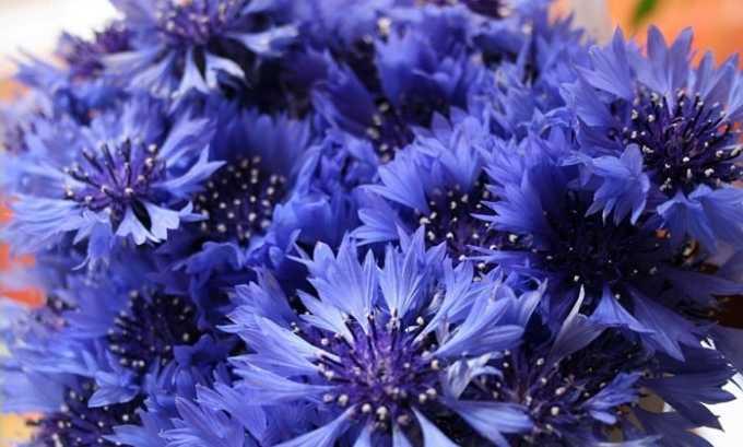 Соцветия василька. 1 ч. л. сырья заливают 200 мл кипятка, выдерживают в термосе час, готовый настой пьют по 2 ст. л. перед каждым приемом пищи