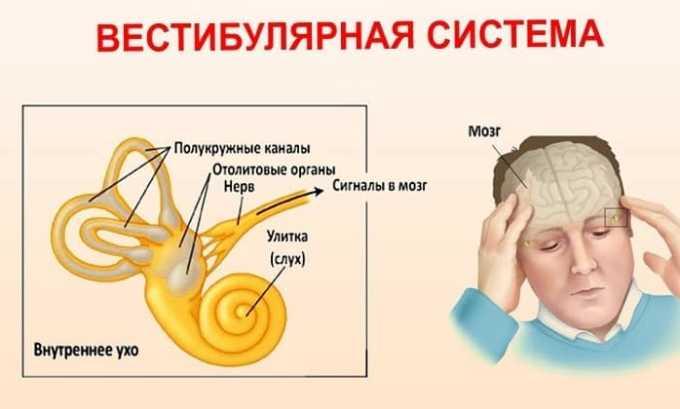 Нельзя принимать лекарство при нарушениях вестибулярного аппарата