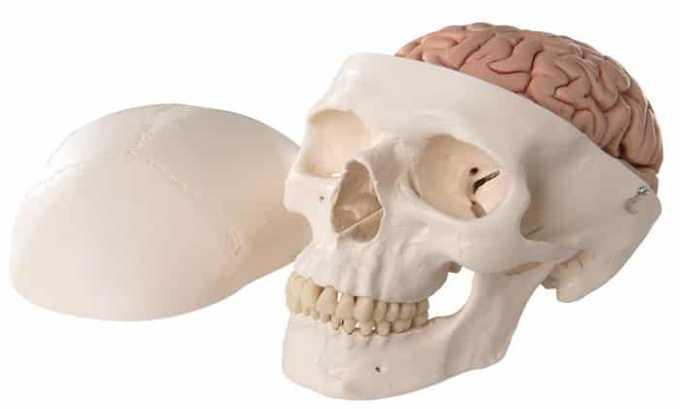Глицин Вис назначается пациентам, перенесшим черепно-мозговые травмы