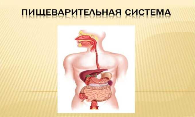 Аминокислота нормализует работу пищеварительной системы