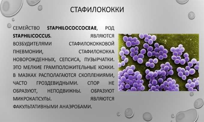 Особой эффективностью препарат отличается в отношении стафилоккока