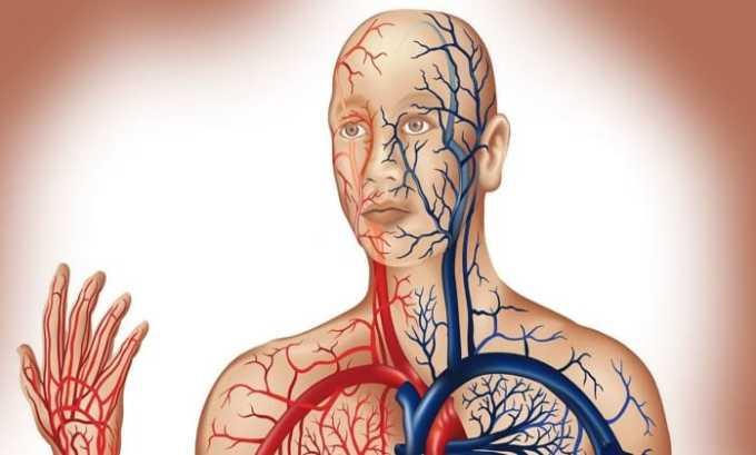 Аминокислота поддерживает тонус мышц и кровеносной системы
