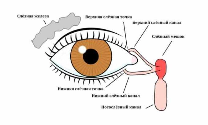 Мазь используют при хроническом воспалении слезного мешка
