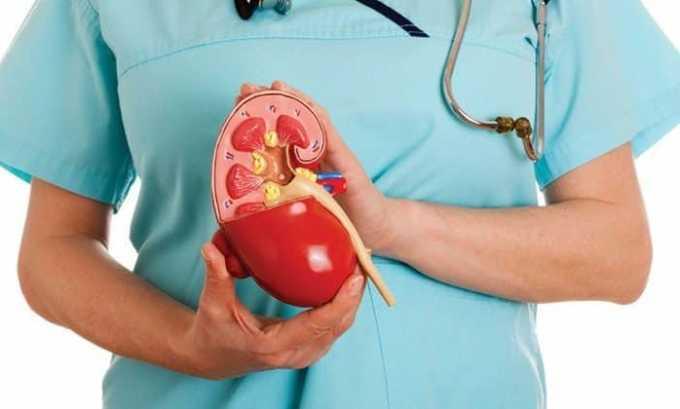 Различные инфекции и заболевания почек и мочевого пузыря часто являются причиной цистита