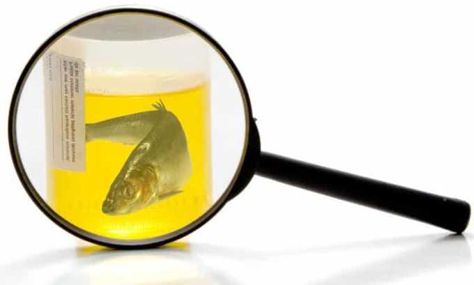 Рыбный запах чаще всего является признаком внедрения бактерий в почки