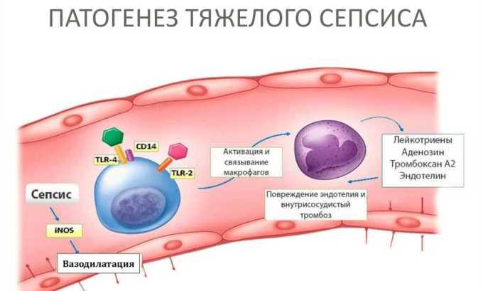 Привитый человеческий организм способен будет самостоятельно справиться сепсисом
