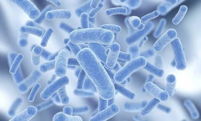 Бактериальный цистит возникает из-за проникновения в организм кишечной палочки