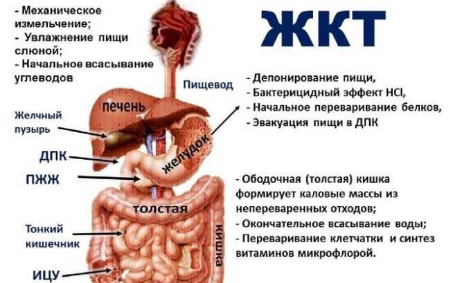 Отмечается расслабляющее воздействие Дротаверина на органы ЖКТ