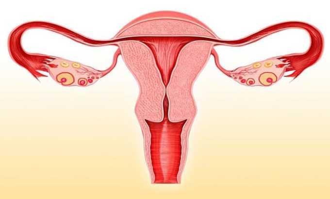 При заболевании матки и придатков назначают Кламосар