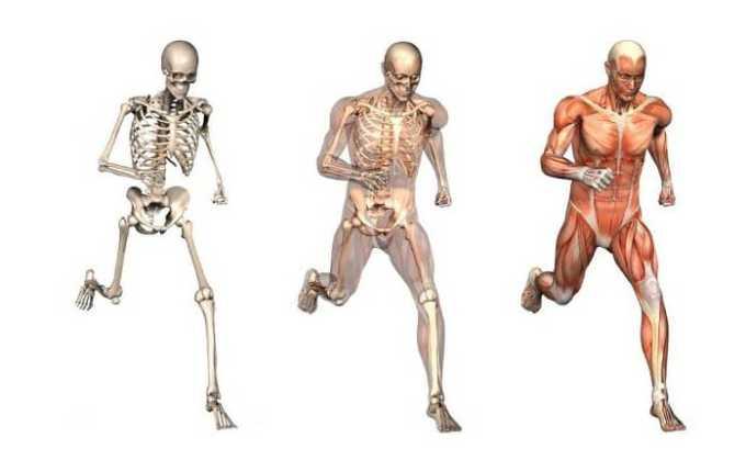 Водорастворимый витамин Д способствует нормальному усвоению кальция, что позволяет укрепить костную ткань