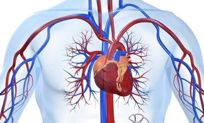 Эуфиллин стимулирует сердечную деятельность