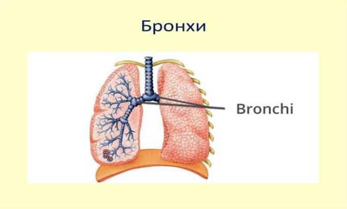 Препарат расслабляет мышечные ткани бронхов
