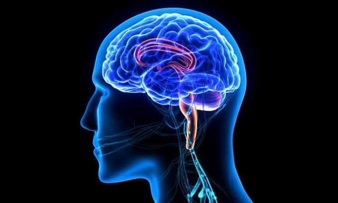 Цитрамон помогает насытить клетки мозга кислородом
