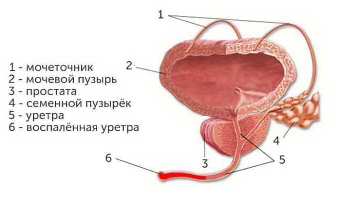 Офлоксацин 200 применяется в лечении гонококкового уретрита