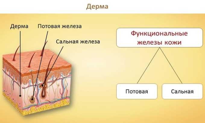 Поражения болезнетворной микрофлорой дермы является показанием к назначению препарата Медопенем