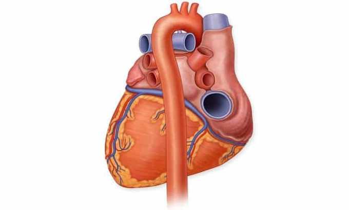 Хартил Д назначают при сердечной недостаточности