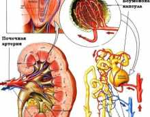 Симптомы и лечение острого гломерулонефрита