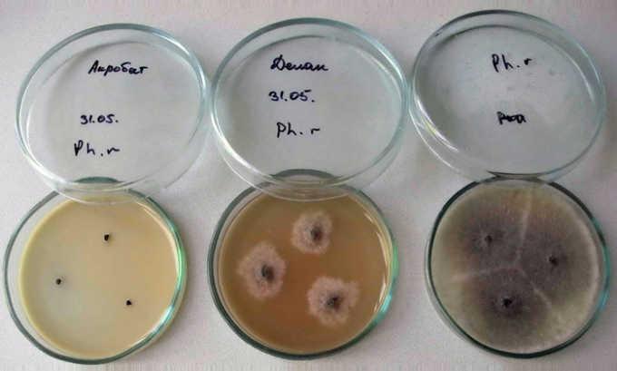 Ципрофлоксацин применяется при цистите бактериальной этиологии после того, как будет сделана антибиотикограмма