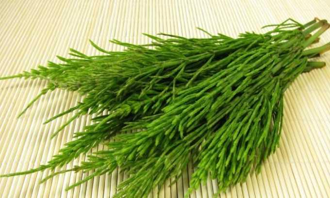 Хвощ - одна из трав, входящих в травяной сбор