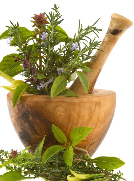 травник лекарственные растения картинки тоже