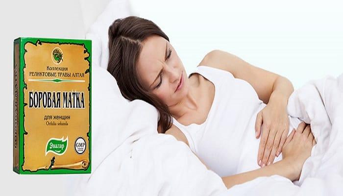 Боровая матка от цистита  Лечение потнеции