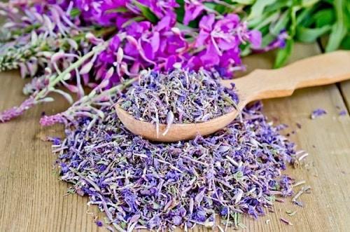 Для лечения цистита можно применять надземную часть (листья и цветы) кипрея
