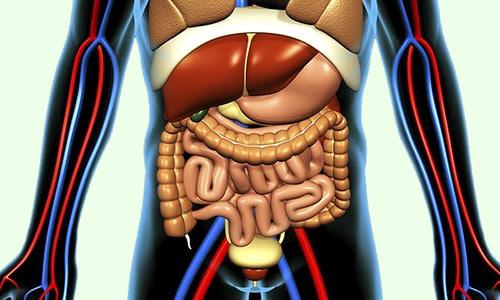 Активный компонент лекарственного средства с кровью распределяется по организму, беспрепятственно проникает во внутренние органы