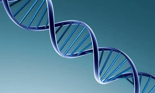 Препарат нарушает генетический материал и не позволяет клетке синтезировать необходимые для жизнедеятельности белки, вследствие чего бактерия погибает