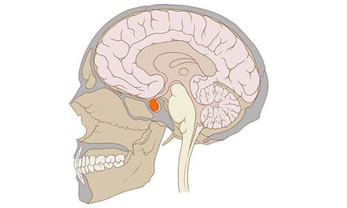 Лекарственное средство подавляет выработку гипофизом адрекортикотропного гормона