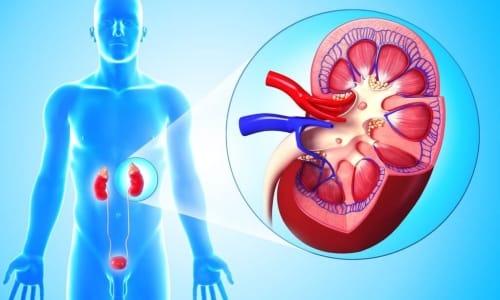 Воспаление в почках и мочевыводящих путях возникает вследствие поражения внутренних органов бактериальными агентами
