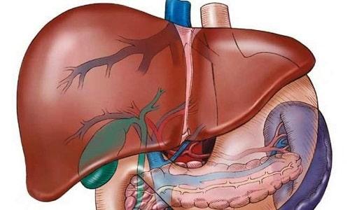Метаболизм происходит в печени