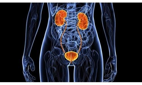 Лекарственный препарат рекомендуется при любых заболеваниях мочеполовой системы