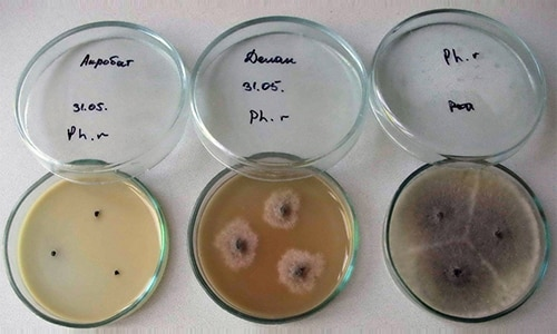 Перед применением препарата рекомендуется проведение бактериологических исследований