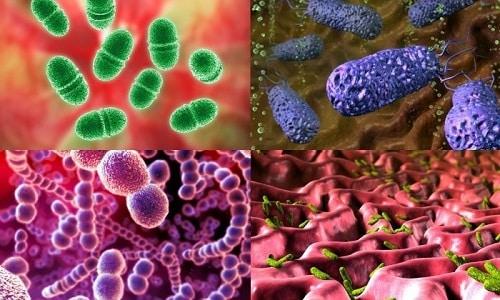 Тиепенем действует в отношении большинства патогенных микроорганизмов, вызывающих инфекционные заболевания у человека