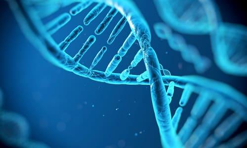 Ломефлоксацин блокирует ДНК-гиразу бактериальных агентов, на фоне этого разрушается транскрипция ДНК