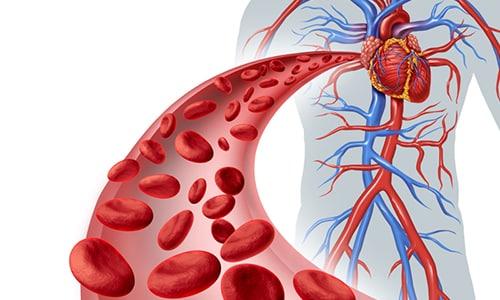 C заболеваниями кровеносной системы рекомендуется соблюдать осторожность в лечении