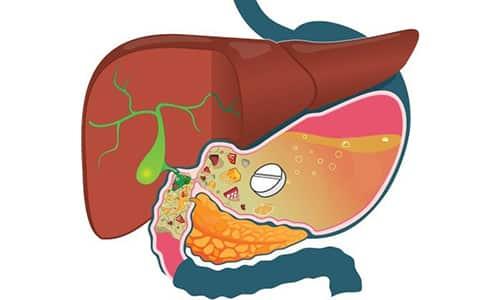После применения препарата активные компоненты быстро всасываются в желудочно-кишечном тракте